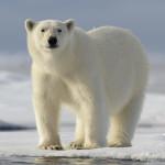 Spitsbergen - Explorer I 2017