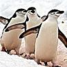 Antarctica - Christmas in Antarctica 2017
