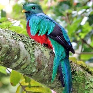 Costa Rica - Cloud Forest & Quetzals 2017
