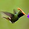 Panama - Best of Birding II 2017
