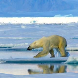 Arctic - Canadian Northwest Passage 2017