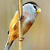 China - Winter Birding 2018