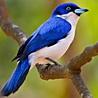 Madagascar - Budget Birding 2018
