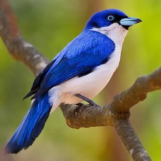 Madagascar - Budget Birding 2017