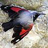 Spain - Birding 2018
