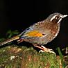 Taiwan - Spring Birding 2019
