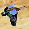 Ethiopia - Endemics Birding I 2019