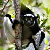 Madagascar - Endemic Wildlife Photographic Tour 2017