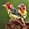 Kenya & Tanzania - Birds & Big Game I 2018