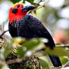 Malaysia & Borneo - Rainforest Birds & Mammals I 2018