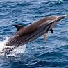 The Maldives - Cetacean & Seabird Cruise I 2018
