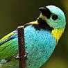 Paraguay - Birds & Wildlife