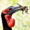 Madagascar - Birds and Big Game - Kruger Extension I 2018