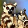 Madagascar - Wildlife of a Magical Island 2017