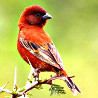 Kenya - Mega Birding Tour 2018