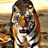 India - Northern: Birds & Tigers II 2017