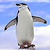 Antarctica - Peninsula Adventure I 2018
