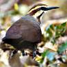 Madagascar - Bird Photographic Tour 2017