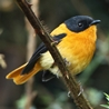 India - Southern: Birding & Wildlife of the Western Ghats Exclusive 2019