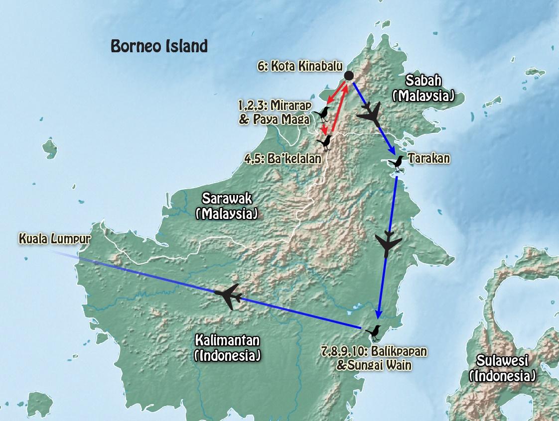 Borneo – Sarawak & Kalimantan Endemics 2018