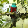 Costa Rica - Cloud Forest & Quetzals 2019