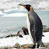 Antarctica - BirdLife International Excursion 2018