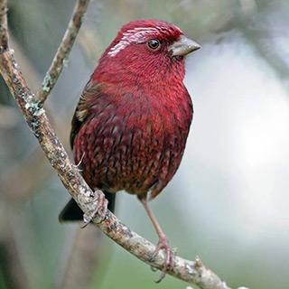 Taiwan - Winter Birding 2018